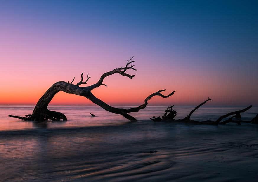 Driftwood-goldenislescom